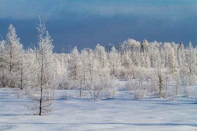 Hoar frost winter landscape CR133 Sax-Zim Bog MN  IMG_0032