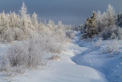 Hoar frost winter landscape CR133 Sax-Zim Bog MN  IMG_0019