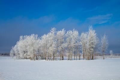 Hoar frost winter landscape CR229-29 Sax-Zim Bog MN  IMG_0042