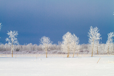 Hoar frost winter landscape CR229-29 Sax-Zim Bog MN  IMG_0041