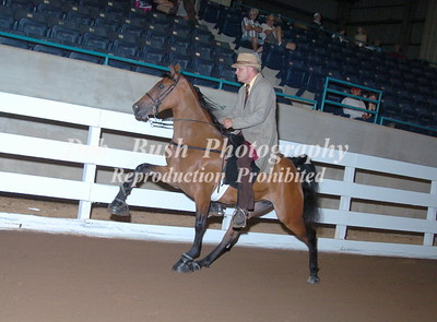 CLASS 17 TWO YR OLD OPEN MARES AND GELDINGS