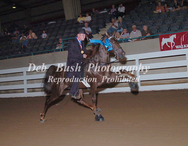CLASS 5 TWO YEAR OLD OPEN STALLIONS