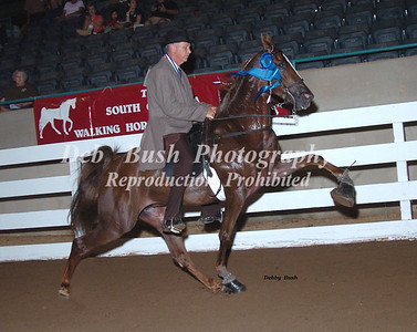 CLASS 8 THREE YR OLD MARES & GELDINGS OPEN