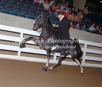 CLASS 32 AGED MARES & GELDINGS OPEN (CANTER)