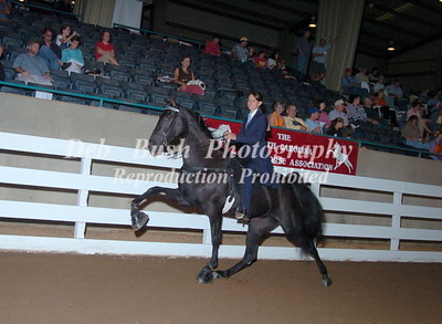 CLASS 35 THREE YR OLD AMATEUR MARES & GELDINGS