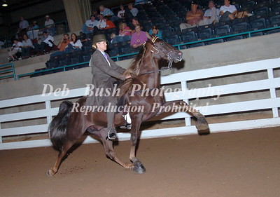 CLASS 43  AMATEUR PONY 18 AND OVER SPEC