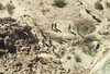 Cutting tamarisk, Horseshoe Canyon, Canyonlands National Park