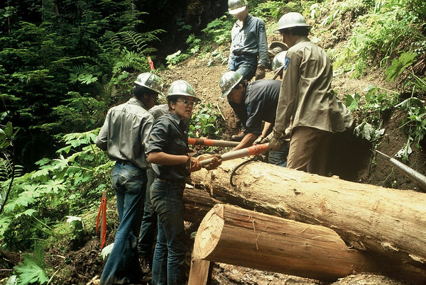 In Olympic National forest we had some sections of puncheon to build, but also two places where the trail needed cribbing to keep it from slumping into the creek.<br /> <br /> The second section of cribbing was much larger, and all hands turned to on it.