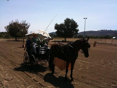 Queen's Champion Equestrian - Summer 2013