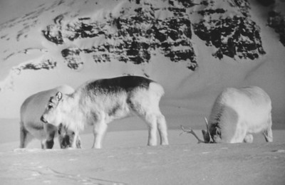 Svalbard-024