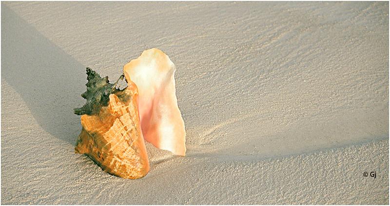 "Print title:  ""  SEA  CASTLE ""  /  © Gj"