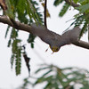 TRYING TO CAPTURE THIS WARBLER FLYING TOWARDS ME AND I MISSED