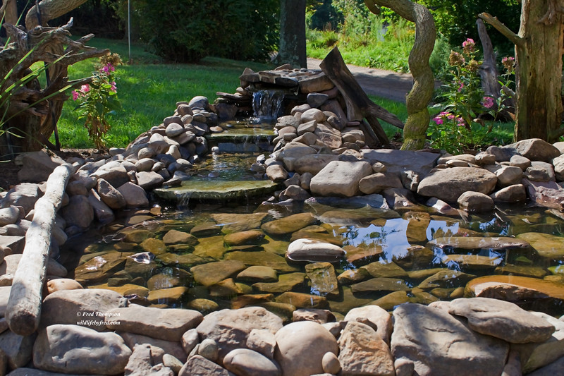 THIS IS THE SHALLOW END OF THE POND AND IS IDEAL FOR THE BIRDS OF ALL SIZES, WATER SHOULD BE 1 TO 3 INCHES DEEP FOR THE BIRDS TO DRINK AND BATH IN