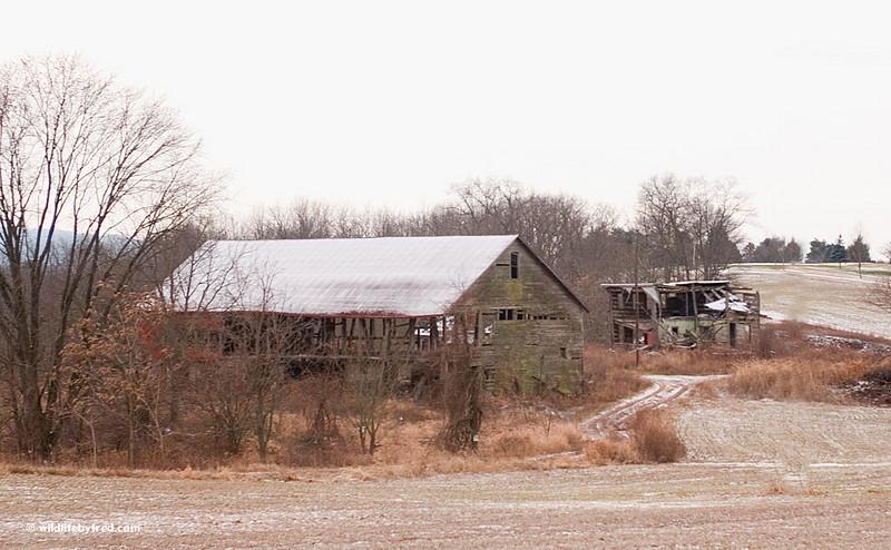 Abandon farm house and barn.