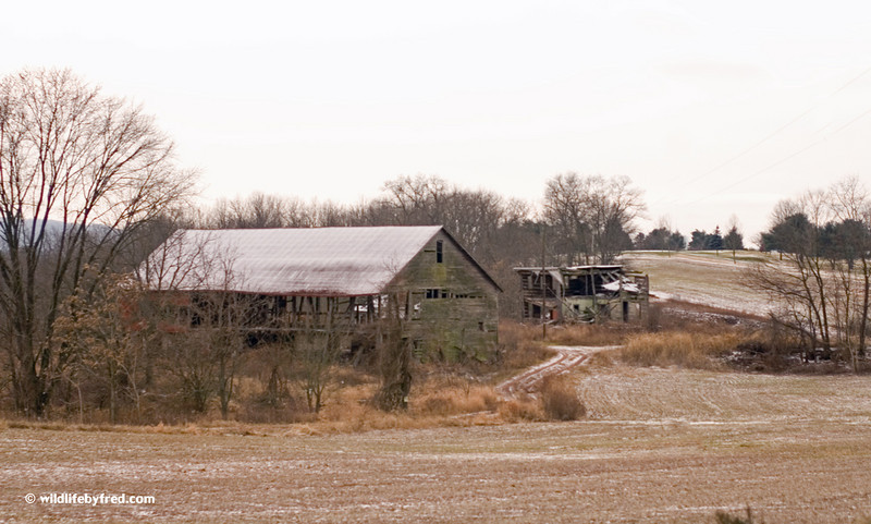 Abandon farm house and barn.
