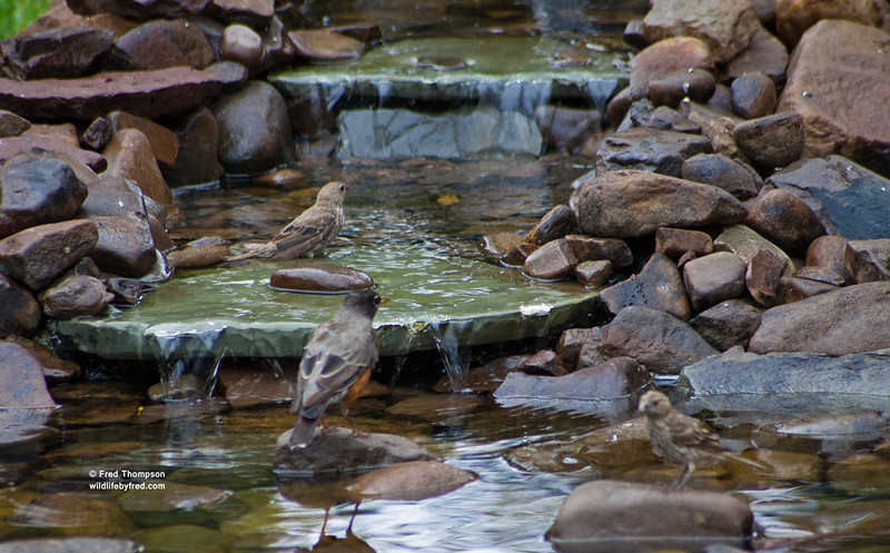 These photos show how much birds love the water, not the best of photos of the birds though.