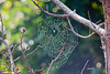 SPIDER WEB WITH EARLY MORNING DEW
