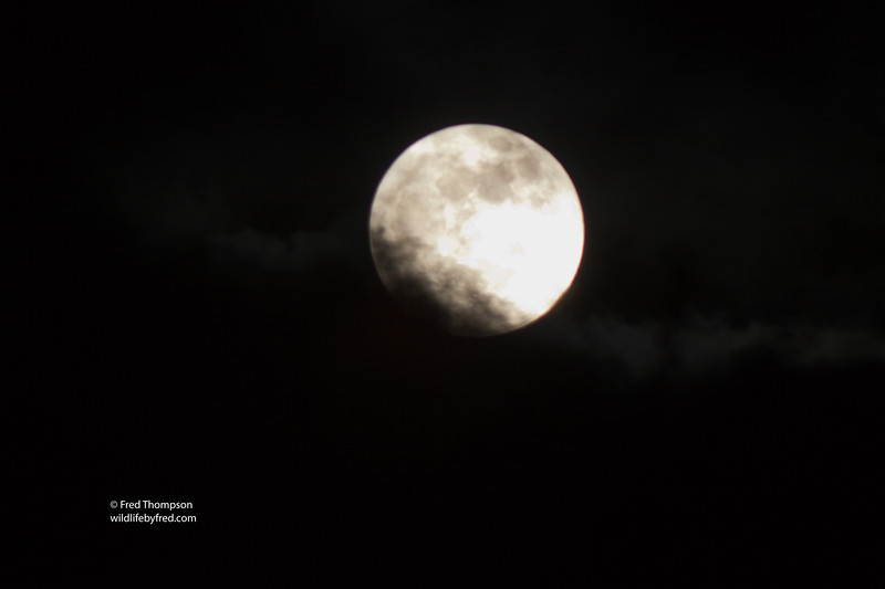 SUPER MOON OF MAY 5, 2012, I ENJOYED TAKING PHOTOS OF THIS WITH CLOUDS PASSING OVER THE MOON AND GETTING MANY DIFFERENT LOOKS AT THIS RARE MOON.