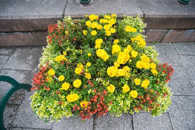 Flowers in Oban