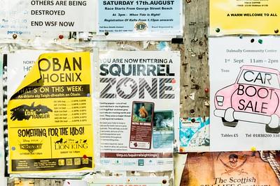 Squirrel Zone