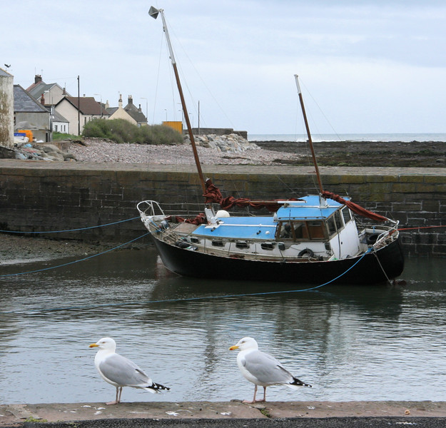 Sail boat and sea gulls at Johnshaven