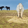 'Ponies'<br /> 15 January 2012<br /> Auchineden, Scotland