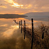 'Inchlonaig Island'<br /> 15 January 2012<br /> Cashel, Loch Lomond, Scotland