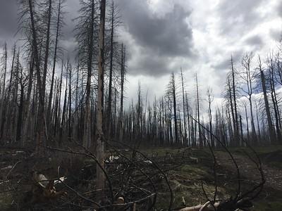 Tree Burns