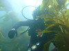 Tony in the Kelp forest