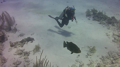 Cayman Brac Grouper Videos