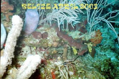 Belize Dive Trip April 2003