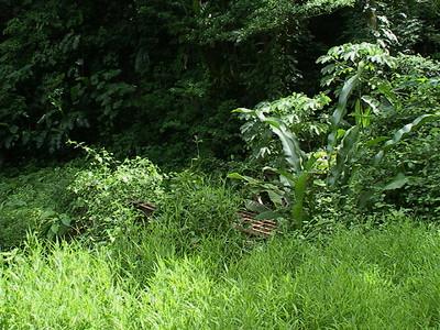 Tobago October '03