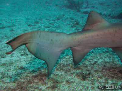 Magic Point Dive with Grey Nurse Sharks