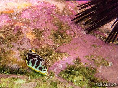 Oak Park Shore Dive