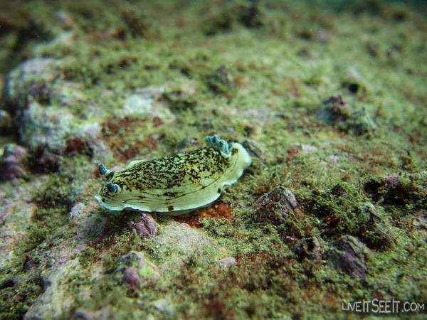 A cool little Nudi wriggling its way along