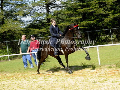 CLASS 4  WALKING HORSE JUVENILE 17 & UNDER
