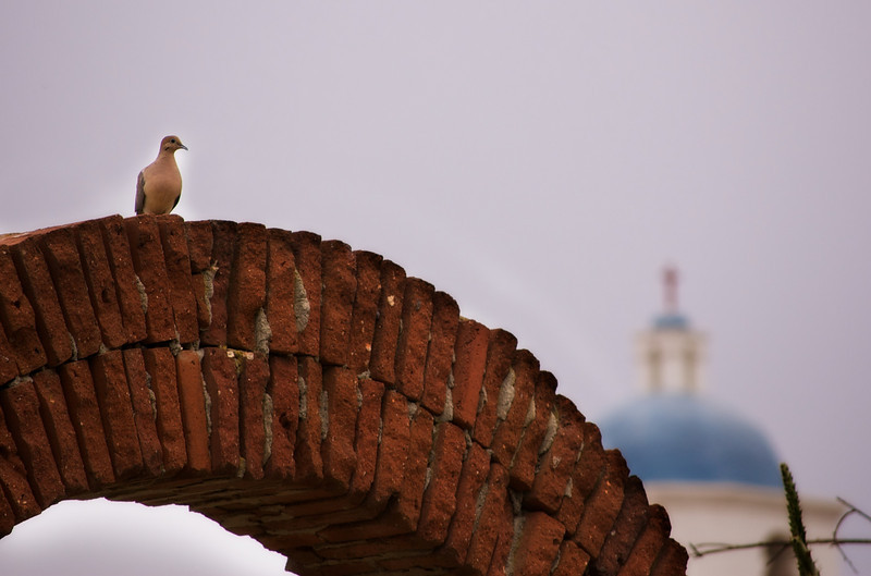Dove and Dome