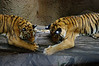 San Diego Zoo & Wild Animal Park : 97 galleries with 4816 photos
