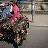 Live chickens being transported via motorbike.
