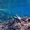 SEA LIFE AT LOS ISLOTES IS., LA PAZ 5-16