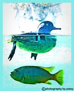 SEA LIFE - FISH