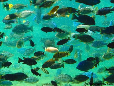 FISH in TANK]