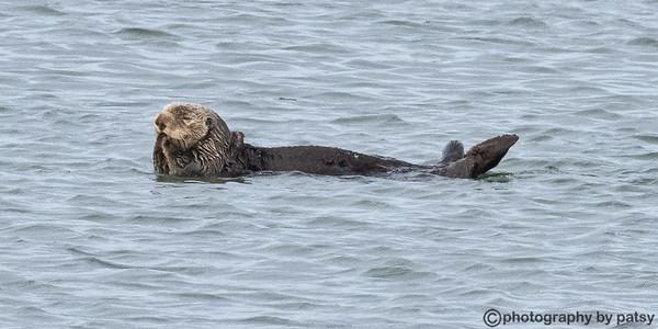 SEA LIFE - MARINE MAMMALS