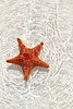 starfish orange in wavy shallow water