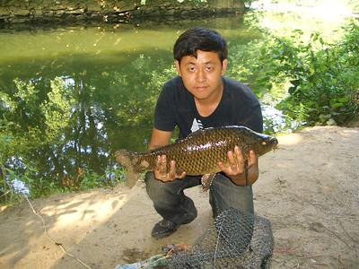 July 19th, 2011 - Common Carp - Wissahickon Creek