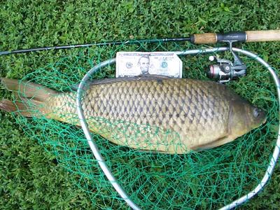July 15th, 2011 - Common Carp - Schuylkill River