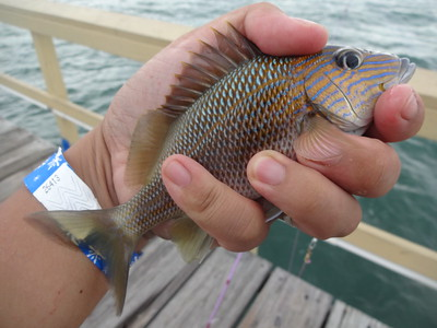 October 28th, 2015 - White Grunt - Anglin's Pier
