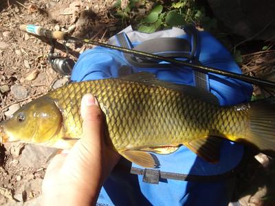 September 19th, 2014 - Common Carp - Buck Creek