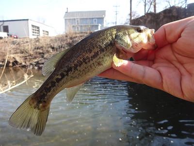 March 7th, 2016 - Largemouth Bass - Buck Creek