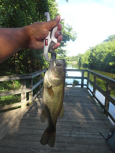 August 17th, 2016 -- Largemouth Bass - Columbia Nameless Ponds